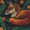 dandelion fox